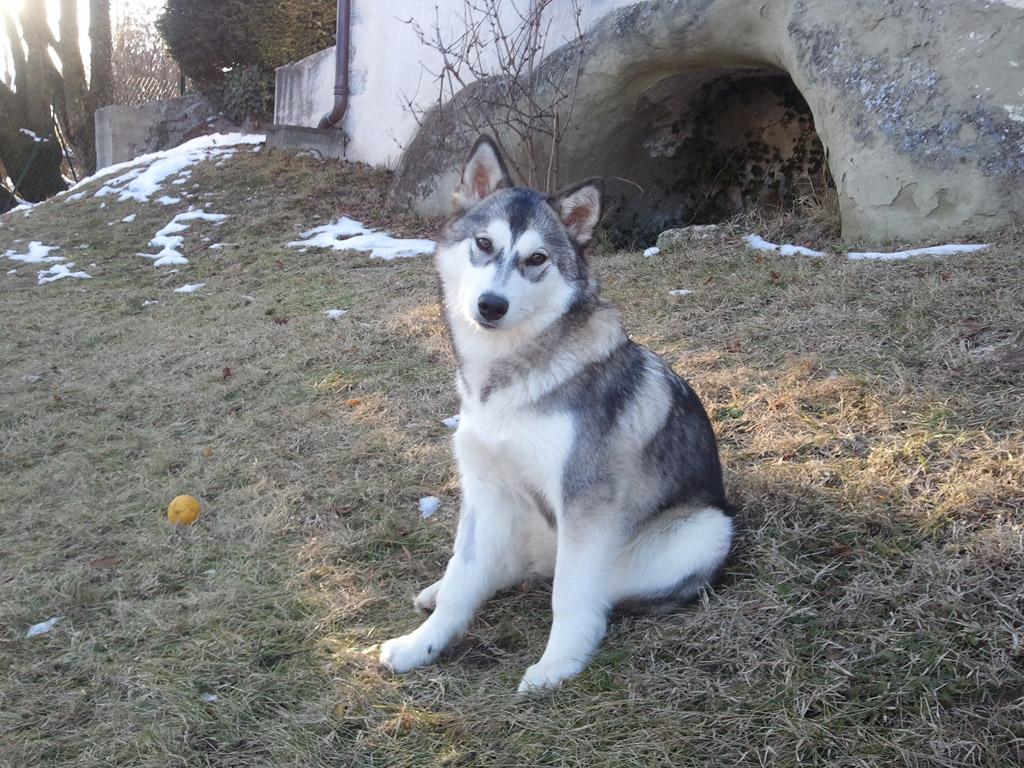 doug-education-husky