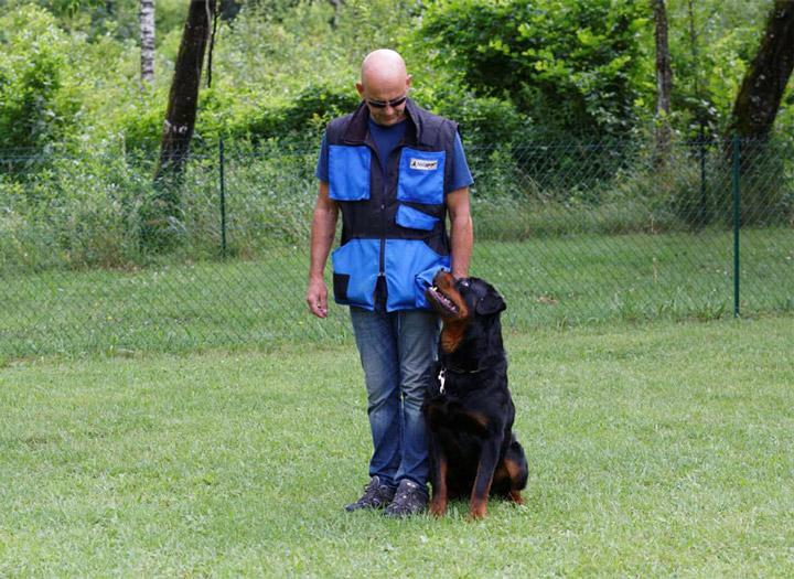 Doug Éducation - Sports canins - Obéissance
