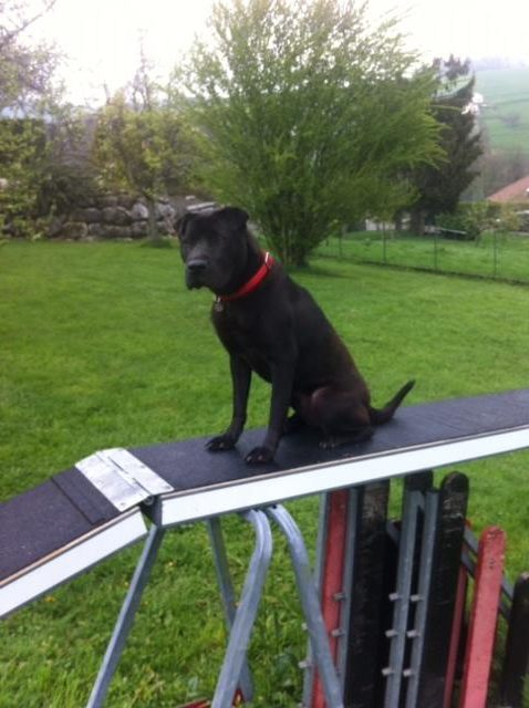 doug-education-agility-chien noir