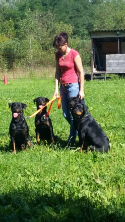 doug-education-les-3-rottweilers