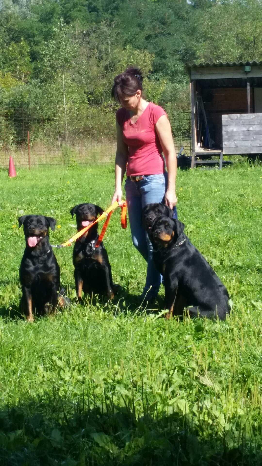 doug-education-les-4-rottweilers