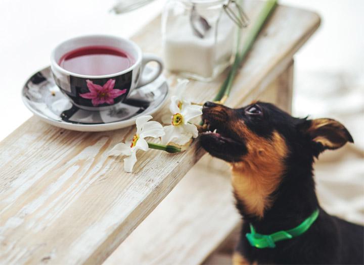 doug-education-canine-comportement-table
